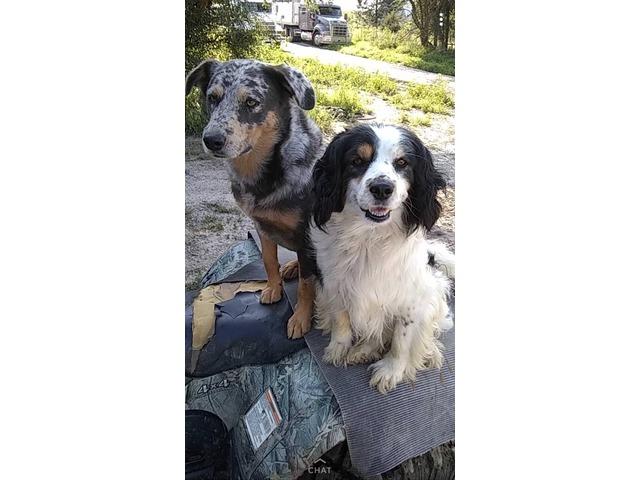 Missing Farm Dog In Valley County Nebraska Clayton